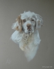Clumber Spaniel  in soft pastel